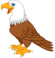 cartoon bald eagle vector image vector image
