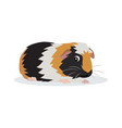 cute friendly guinea pig icon isolated on white vector image vector image