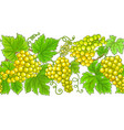 grapes branches horizontal pattern vector image