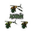 set of hand drawn acorn on the branch vector image