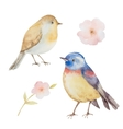 set watercolor birds and flowers vector image
