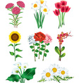 beautiful popular flowers photo realistic set vector image