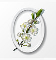 branch of white cherry flowers in paper frame vector image vector image