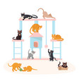 cute kittens play vector image