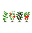 planting and cultivation concept in vector image vector image