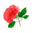 rose pink stem and leaves on a white background vector image vector image