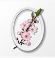 branch of pink sakura cherry flowers in frame vector image