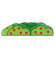 bush with berries icon image vector image