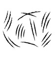 claws scratches claw marks dangerous or tiger vector image