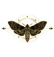 golden moth over sacred geometry sign isolated vector image vector image