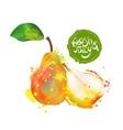 Pear fresh organic food vector image