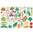 color vegetables tomato zucchini potatoes vector image