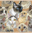 seamless colorful realistic cats heads vector image vector image