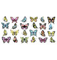 set colored butterflies vector image