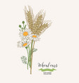 wheat ears with chamomiles rustic bouquet plants vector image vector image