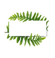 floral modern card design green forest fern frame vector image