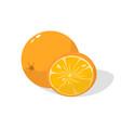 fresh orange on white background vector image vector image