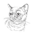 monochrome burmese cat vector image