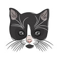 face of a cute kitten hand-drawn cat on a white vector image vector image