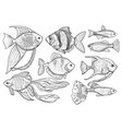 freshwater and ocean fish animal sketch on white vector image