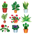 home plants vector image vector image
