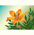 orange lily realistic flower vector image