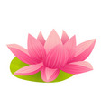 pink lotus icon in cartoon style vector image vector image