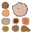 tree wood trunk slice texture circle cut wooden vector image vector image