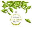 tea shop emblem with hand drawn tea leaves vector image vector image