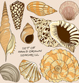Set of isolated seashell icons vector image