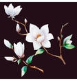 Watercolor magnolia flowers vector image vector image