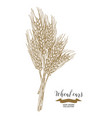 wheat ears rustic bouquet design hand drawn vector image