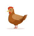 brown hen poultry breeding vector image