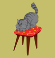 cat on a chair vector image vector image