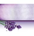 Lavender springs bouquet vector image