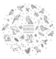 set different birds line icons vector image
