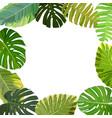 tropical leaf frame vector image vector image