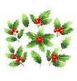 christmas holly branches realistic vector image vector image