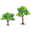 collection trees on white background cartoon vector image vector image