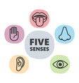 icon set of five human senses vector image
