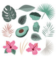 set with wild tropical rainforest plants vector image