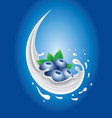 milk splash with fresh blueberry and strawberry vector image vector image