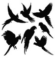 Parrots amazon jungle birds silhouettes