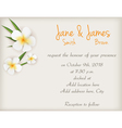 wedding plumeria background vector image vector image