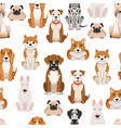 different dogs in cartoon style seamless vector image vector image