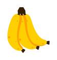 isolated banana fruits vector image