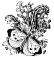 large white cabbage butterfly vector image vector image