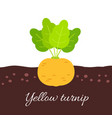 yellow turnip icon with title vector image