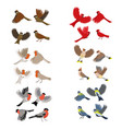 collection birds robin red cardinal tits vector image