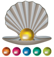 pearls and a shell vector image vector image